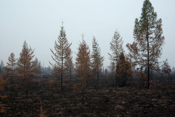 Пожарище на участке Ягодное-Дебин