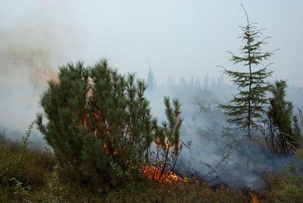 Пожар на участке Дебин-Синегорье