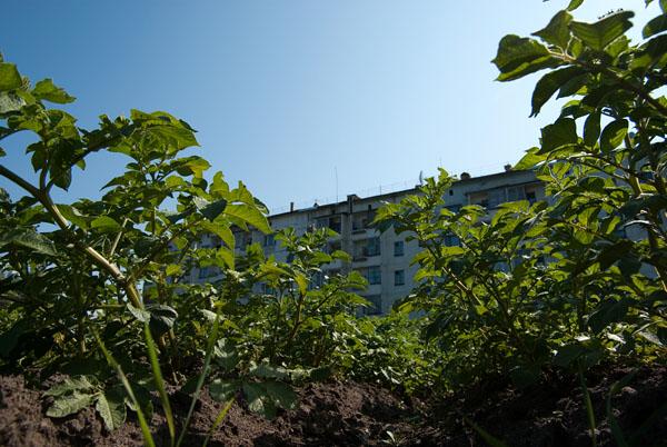 Картофельные плантации
