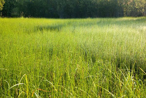 Зеленые луга вдоль р. Эльген